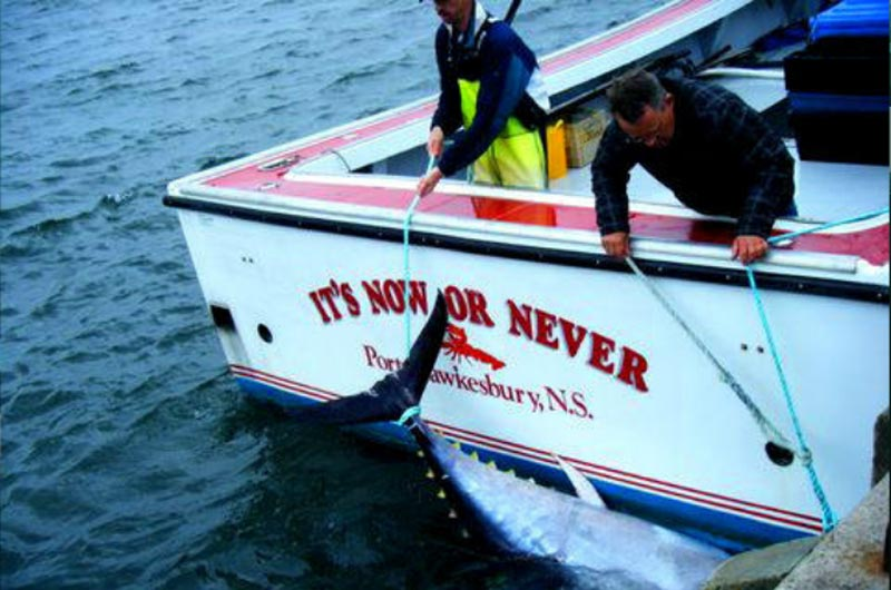 It's Now or Never Tuna Charters