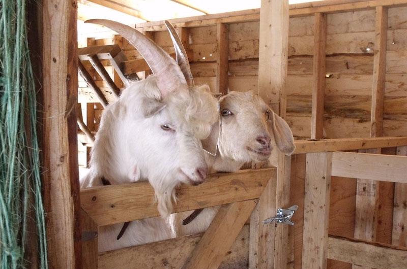 Groovy Goat Farm & Soap Company