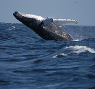 Capt. Cox's Whale and Bird Watch