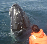 "Humpback ""checking out"" the guests."