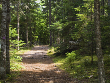 Walking trail in the Uniacke Estate Museum Park