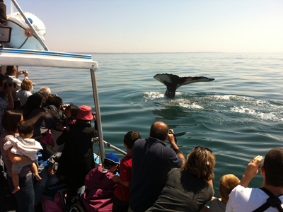 Explore the Shore,then Whale Watch!